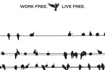freebird image
